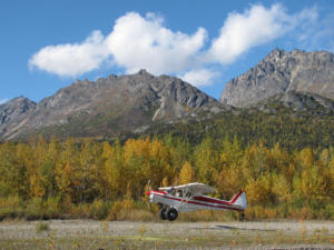 hunting Supercub with hunting guest no tail